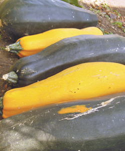 Courgettes galore